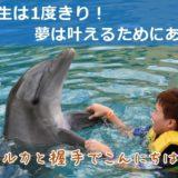 イルカと遊んだり、豪華客船で豪遊したり、人生は満喫するためにある!