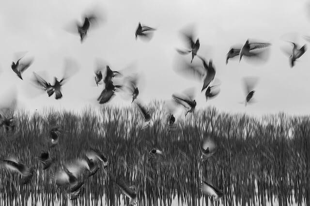 birds-801778_640