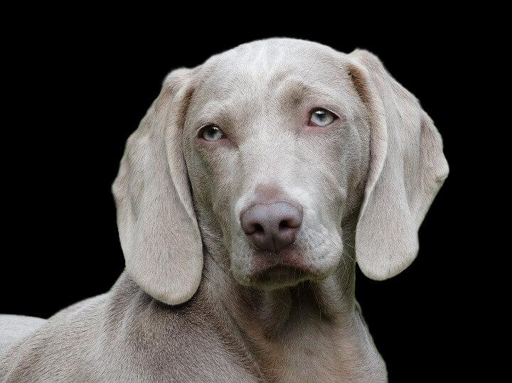 dog-1742295_1280